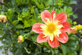 pretty flower free stock photos