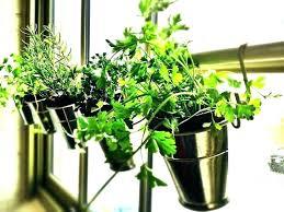 kitchen herb garden kit window sill garden kit windowsill herb garden kit indoor herb garden kit