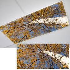 office ceiling light covers. perfect ceiling tree woods fluorescent office light cover this looks pretty awesome i  think we need to office ceiling light covers l