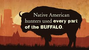 the buffalo and native americans video native american cultures the buffalo and native americans