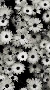 35 HD Black & White iPhone Backgrounds