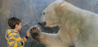 Image result for zoo