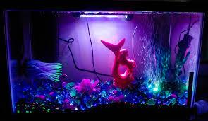 Glofish Light Bar 10 Gallon Glo Fish Tank Contains Glo Fish Black Rainbow