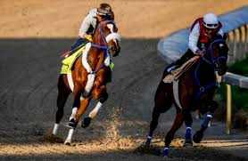 Signalman Brings Thousandaire Owner To Preakness Stakes