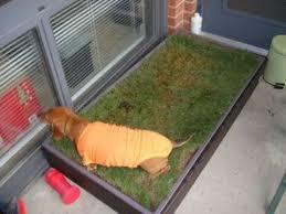 dogs bathroom grass. dogs bathroom grass