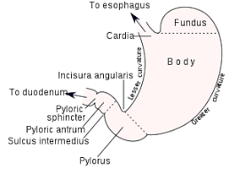 Pyloric Stenosis Wikipedia