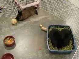 petsmart animals bunny. Modren Petsmart Rescue Bunnies Visit PETSMART For Petsmart Animals Bunny H