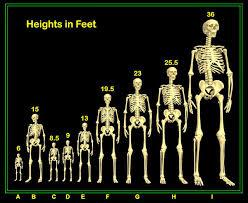 Genesis 6 Giants Charts