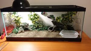 picture of how to set up a reptile terrarium