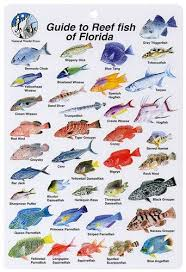 To Florida Guide Fish - Reef Card