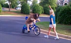 Картинки по запросу женщина и пёс на велосипеде в очках