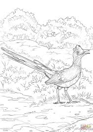 Small Picture Lesser Roadrunner coloring page Free Printable Coloring Pages