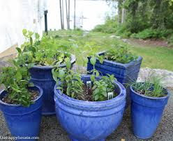 Kitchen Garden In Pots Easy Diy Kitchen Herb Garden In Deck Pots The Happy Housie