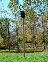 bat houses are a good way to keep bats in the area after an exclusion has taken place