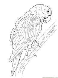 Oiseau Jeux Pinterest Oiseaux Coloriage Et Coloriage Animaux