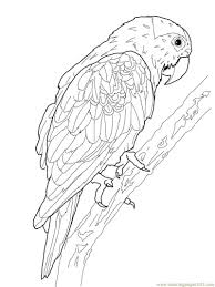 printable parrot coloring pages