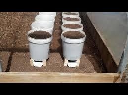 bucket gardening. Bucket Gardening )
