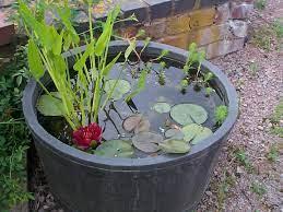 mini pond starter pack merebrook pond