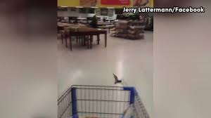 Walmart Alvin Tx Bats Swoop Between Shoppers In Meat Section Of Alvin Walmart Store