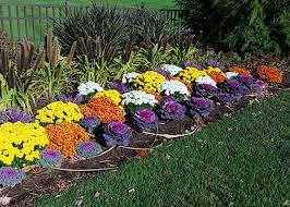 11 Fall Gardening Tips  Patrick Square Clemson SCFall Gardening