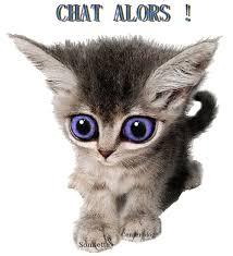 """Résultat de recherche d'images pour """"gif chat vite"""""""