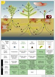 Functions Contaminants Of Plant–microbe As Interactions Biodegradation Drivers The Ecosystem Organic - For Sciencedirect Relevant