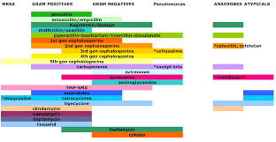 Spectrum Coverage Of Antibiotics Covered In A Chart