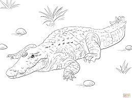 106 Dessins De Coloriage Crocodile Imprimer Sur Laguerche Com
