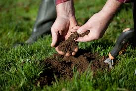it s also necessary to give your soil a test on the proportion of nutrients and chemicals it contains this test is simple and helps you figure out the way