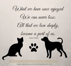 Pet Quotes Beauteous What We Have Once Enjoyed Quote Helen Keller Dogs 48 QuotesNew