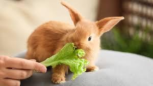 how do rabbits compare