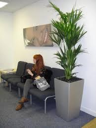 office pot plants. tall silver pot office plants o