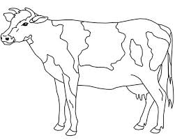 Small Picture Cow Coloring Page for Kids NetArt