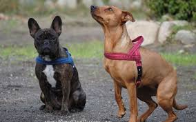 Euro Dog Designs Coupon Code Euro Dog Designs