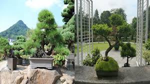 bonsai gardens. Bonsai Garden Design-Small Landscape Gardens A