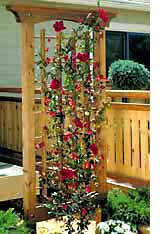 Small Picture trellis designs climbing plants garden trellis wood project t