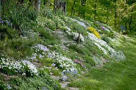 Small Picture Actionable Info for Natural Health Enthusiasts Rock Gardens and