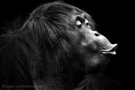 black and white animal photography. Interesting And Pin It Wolf Ademeit Is A German Photographer Whose Dramatic Black And White   On Black And White Animal Photography D