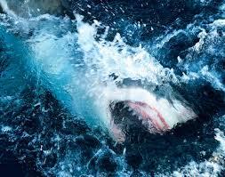 How to watch Shark Week 2021: Schedule ...