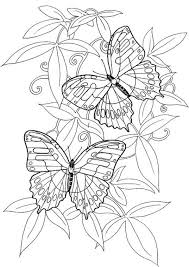 Small Picture Hard butterflies Coloring Pages for Adults to print adult