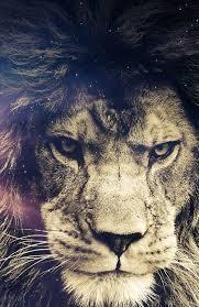 angry lion wallpaper. angry lion wallpaper 3