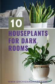 low light house plants indoor plants