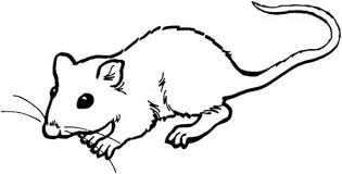 Small Picture rat coloring pages little mouse and rat coloring pages bulk color