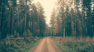 Image result for georgia pine forest