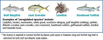 Coastal Species Florida Saltwater Fishing Regulations