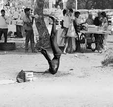 a photo essay for clarity and fun bhagavad gita head buried headstand bombay 1971