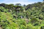 imagem de Turvo Paraná n-18