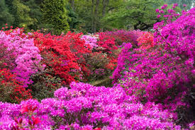 11 best landscaping shrubs to grow in
