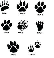 Paw Print Coloring Pages Highfiveholidays Com