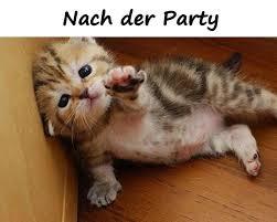 Sprüche Beste Lustige Bilder Tod Kater Alkohol Meme